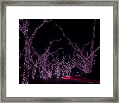Framed Print featuring the photograph Disco Trees by Jim Snyder