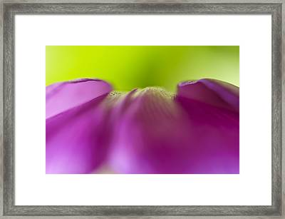 Discovery In Color Framed Print by Christi Kraft