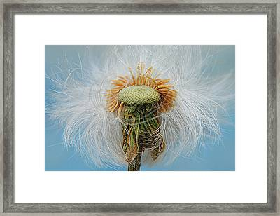 Disheveled Framed Print by Frozen in Time Fine Art Photography
