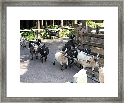 Disneyland Park Anaheim - 121225 Framed Print by DC Photographer