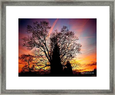 Display Of Beauty Framed Print by Christy Ricafrente
