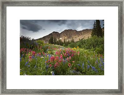 Display Of Colors Framed Print