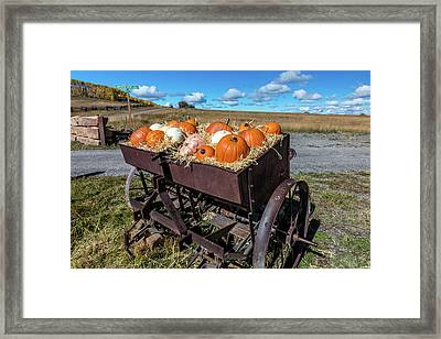 Display Of Halloween Pumpkins, Hastings Framed Print