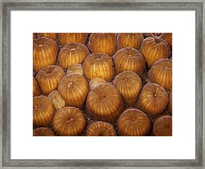 Macro Abstract Of Coral Framed Print by Jean Noren