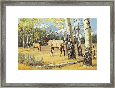 Distant Bugle Framed Print
