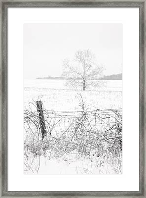 Distant Tree Framed Print