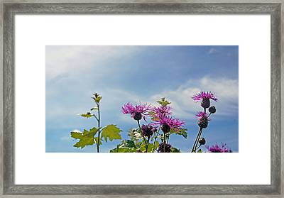 Distel Framed Print by Kees Colijn