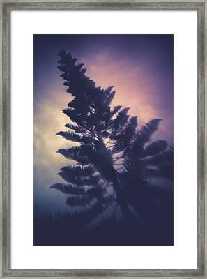 Distorted Pine  Framed Print
