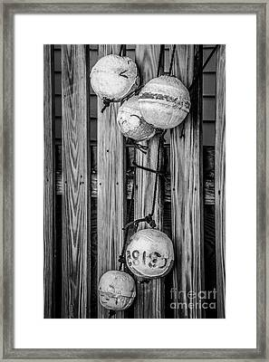 Distressed Buoys On Fencing Key West - Black And White Framed Print by Ian Monk