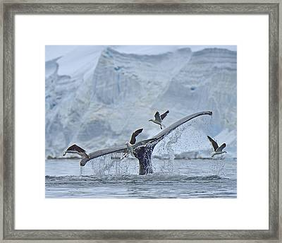 Disturbed Framed Print by Tony Beck