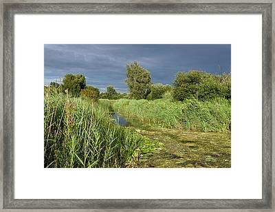 Ditch And Reedbeds Framed Print by Bob Gibbons