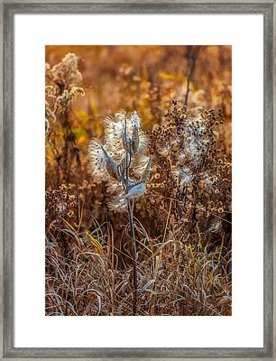 Ditch Beauty Framed Print by Steve Harrington