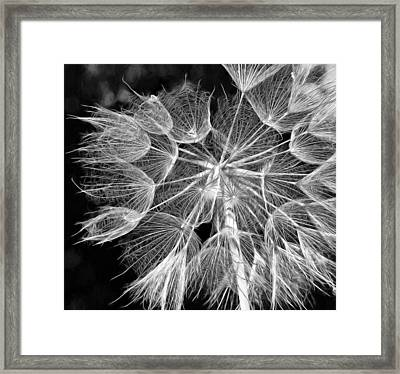 Ditch Lace Bw Framed Print by Steve Harrington
