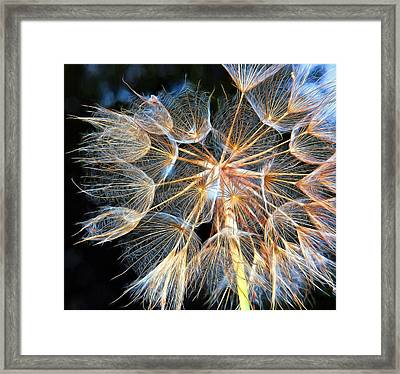 Ditch Lace Framed Print