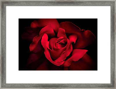 Framed Print featuring the photograph Haunting Red Rose Flower by Jennie Marie Schell
