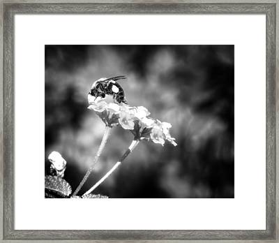 Dive Right In Honey II Framed Print by Mark Andrew Thomas