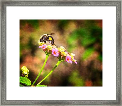 Dive Right In Honey Framed Print by Mark Andrew Thomas