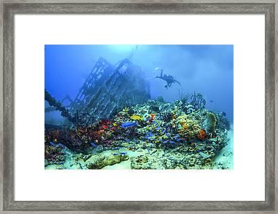 Diver At The Wreck Framed Print by Debra and Dave Vanderlaan