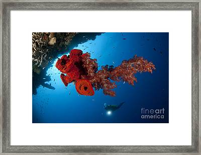 Diver Looks On At A Bright Red Soft Framed Print by Steve Jones