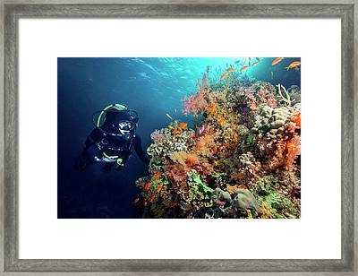 Diver With Corals And Reef Fish Framed Print by Louise Murray