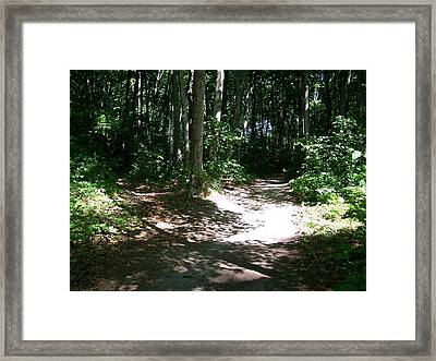 Diverging Path In The Woods Framed Print