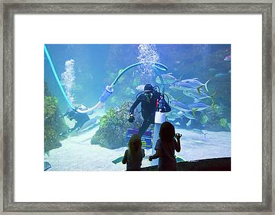 Divers Cleaning Aquarium Tank Framed Print by Jim West