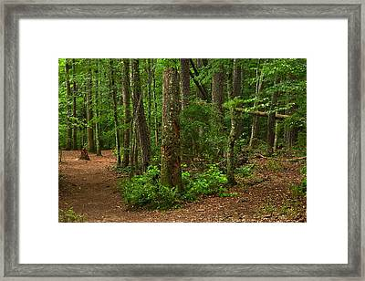 Diverted Paths Framed Print