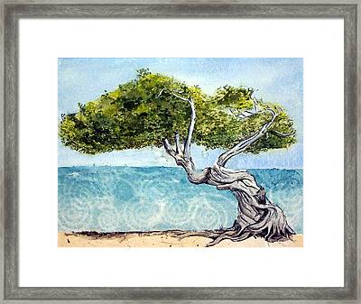 Divi Divi Tree Framed Print