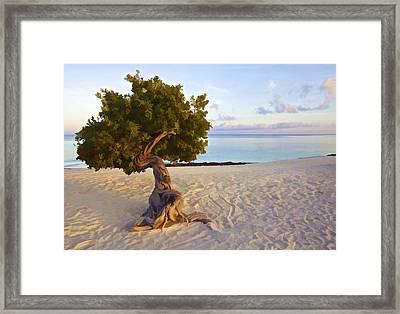 Divi Divi Tree Of Aruba Framed Print by David Letts