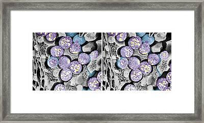 Dividing Pollen Cells Framed Print by Professor T. Naguro