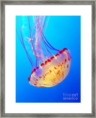 Divine Dancer Framed Print