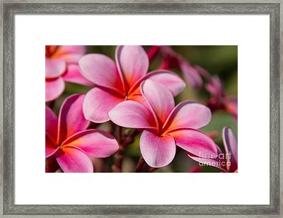 Divine Joy Framed Print by Sharon Mau