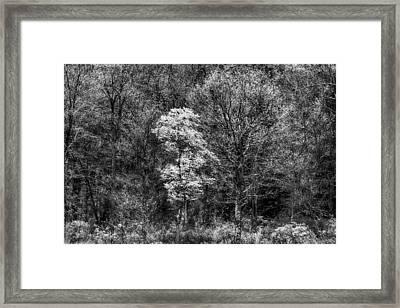 Divine Presence Framed Print
