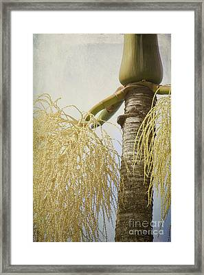 Divine Things Framed Print by Sharon Mau
