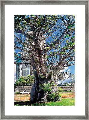 Divisions Framed Print by Terry Reynoldson