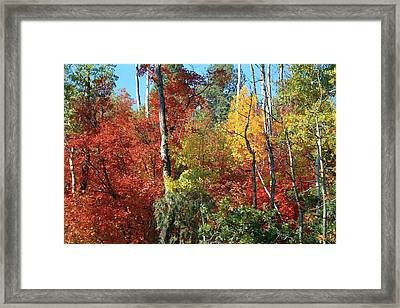 Dixie Autumn Framed Print