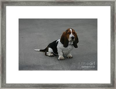 Dixie Big Paws Long Ears Framed Print