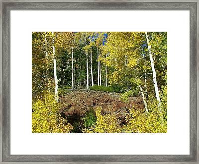 Dixie Forrest Framed Print