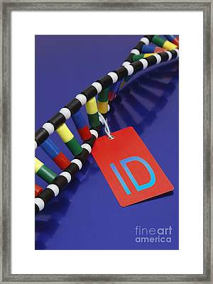 Dna Double Helix, Id Tag Framed Print