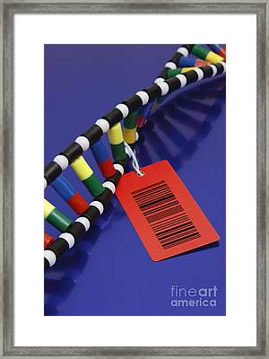 Dna Double Helix With Barcode Framed Print