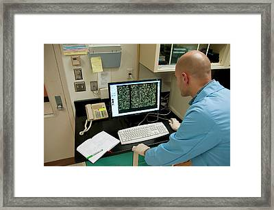 Dna Microarray Research Framed Print by Food & Drug Administration