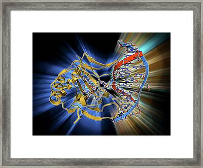Dna Repair Enzyme Framed Print by Laguna Design