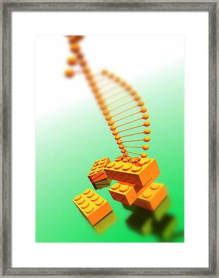 Dna Framed Print by Victor Habbick Visions