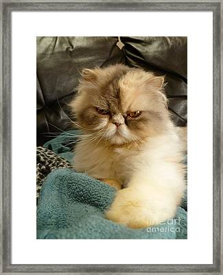 Do I Look Amused? Framed Print by Vicki Spindler