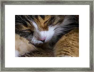 Do Not Disturb Framed Print by Andrew Pacheco