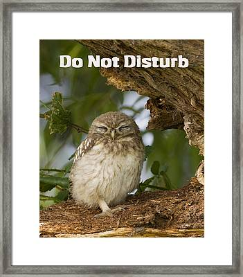 Do Not Disturb Framed Print by Paul Scoullar