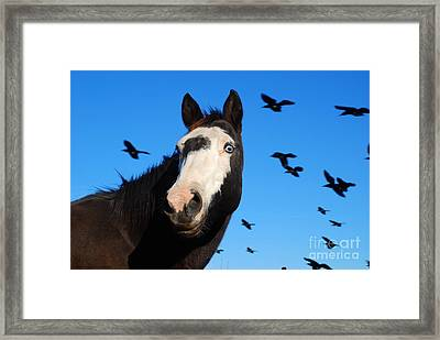 Do Not Look Up Framed Print by GD Rankin