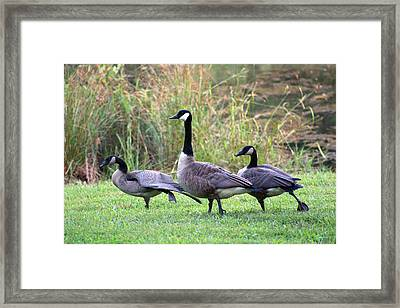 Framed Print featuring the photograph Do The Hokie Pokie by Lorna Rogers Photography