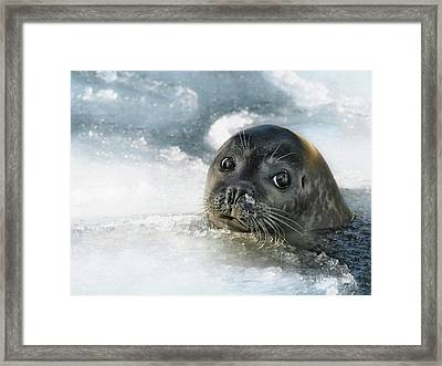 Do You Have A Fish ? Framed Print