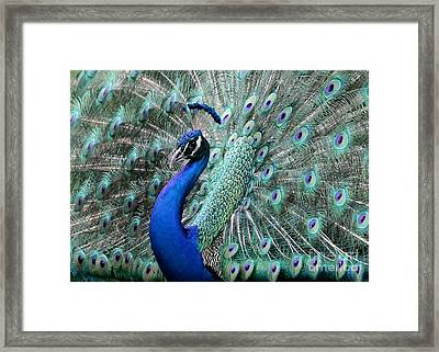 Do You Like Me Now Framed Print